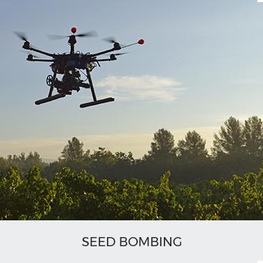 Seed Bombing